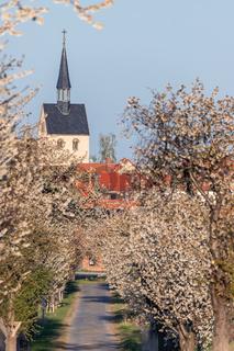 Kirschblüte von blühenden Bäumen gesäumte Straße im Frühjahr