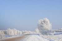 Road Through Winter  Birch Forest Covered With Hoarfrost.