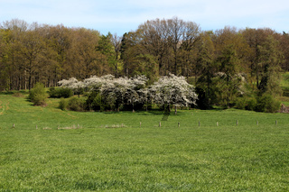 Blühene Bäume auf einer Wiese