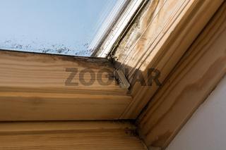 Am Dachfenster bildet sich Schimmel