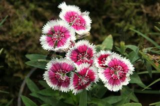 Spectacular Floral Design