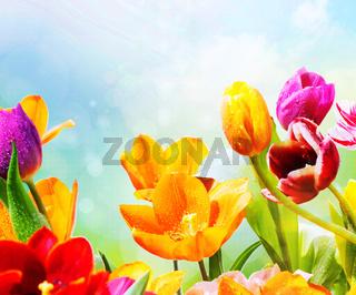tulpen tropfen himmel