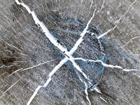 Pattern of dark wood on cut of tree. abstract brown texture with cracks. Brown texture with white cr