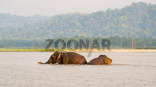 Elephants bathing in Chitwan national park, Nepal