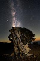 Night scene with Milky Way and old juniper tree in El Hierro island, Canary Islands, Spain.