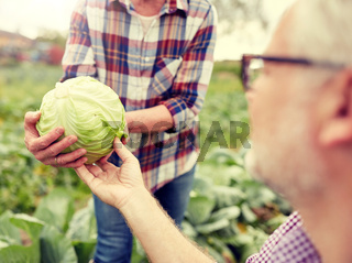 senior couple picking cabbage on farm