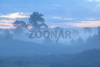 hills and trees in foggy dusk