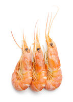 Boiled tiger prawns.  Tasty shrimps.
