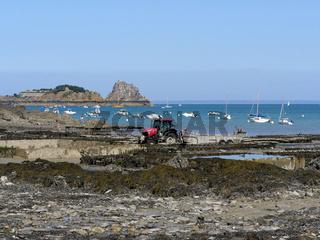 Austernbänke von Cancale, Bretagne