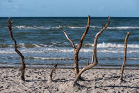 Baltic sea coast on Darss in Germany