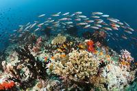 Korallenriff, Malediven