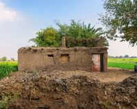 Village clay rocked brown house with exotic plants on roof