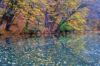 Colorful autumn trees reflection water