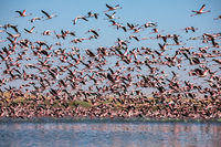Flamingoes at bird paradise, walvis bay, namibia