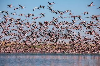 Flamingoes at bird paradise, walvis bay, namibia
