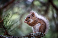 Cute squirrel eating