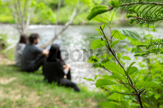 Fresh plants near lake with people sitting
