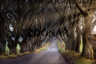 Sunrise at The Dark Hedges County Antrim, Northern Ireland