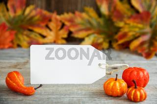 Label With Autumn Decoration, Copy Space, Leaves, Pumpkin