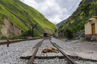 Train ride in the Andes to the devil's nose in Ecuador, a dog lies on the rails.
