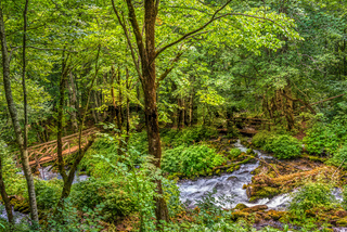 Bridges in forest