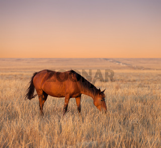Horse grazing in evening pasture