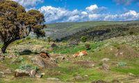 beautiful landscape of Bale Mountain, Ethiopia