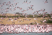 Flamingoes in bird paradise, Walvis Bay, Namibia.
