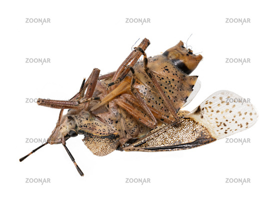 Closeup of a dead bug isolated on white