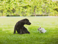 Good relationships between pets are formed in early childhood