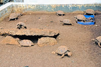 Tortoise breeding station in the Galapagos