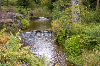 small creek in the Vosges mountains