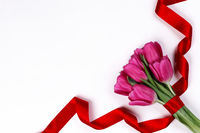 Tulip flowers and ribbon on white