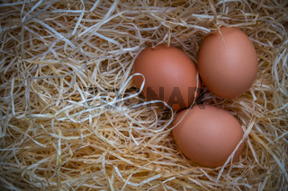 Free Range Eggs With Copy Space