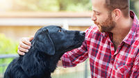bearded man with labrador retriever friendship