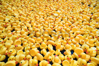 An army of rubber ducks invades our seas, with catastrophic consequences!
