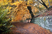 sunlit footpath next to a moss covered stone wall in autumn woodland with orange and golden leaves