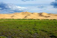Green grass in front of sand dunes Gobi