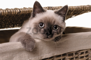 Nosy little cat