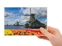 Hand and Windmills and flowers in Netherlands (my photo)