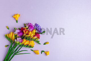 Bouquet of colorful freesias.