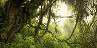 Guatemala Jungle Landscape