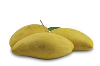 Ripe sweet mangoes with leaf on white background