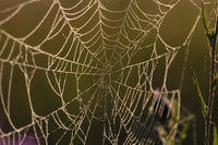 Spiders Web backlighting from morning sun