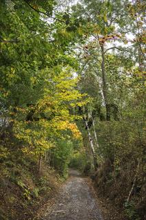 Der Weg durch den Herbstwald