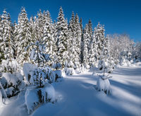 Alpine mountain snowy winter fir forest with snowdrifts