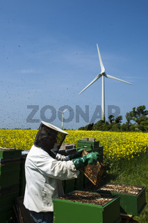 Imker bei der Arbeit mit seinem Bienenvolk am Rapsfeld