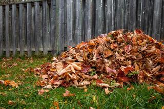 Autumn leaves raked up in a backyard pile