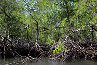 mangroves in a nationalpark