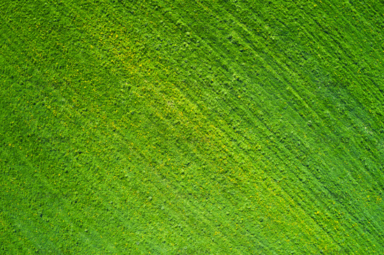Beautiful meadow  with yellow flowers aerial view